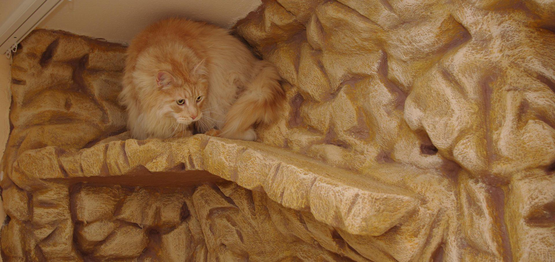 Katzenpension – Schönheitssalon Pimpek
